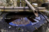 2020桜咲く京都十輪寺の業平桜 - 花景色-K.W.C. PhotoBlog