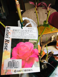 薔薇通り❗️ - 富士のふもとの農業日誌