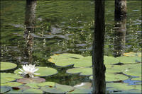 六月の小呂池 - 薫の時の記憶