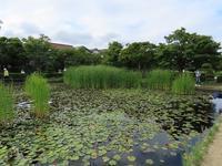 行船公園のカルガモ親子 - 東京いきもの雑記帳