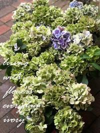 6月27日(土)28日(日)は、 雪boloさんの 天然酵母パンの日です〜♬ -  Flower and cafe 花空間 ivory (アイボリー)