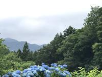 今日のうちに山へ芝刈りに!! - よく飲むオバチャン☆本日のメニュー
