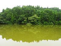 たくさん咲き始めました - 千葉県いすみ環境と文化のさとセンター