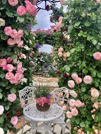 ブログでオープンガーデン2020〜ガゼボから3連アーチのバラ達 - 薪割りマコのバラの庭