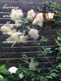 明日6月28日(日)は……………。 -  Flower and cafe 花空間 ivory (アイボリー)