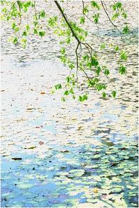 初夏の長谷池 - HIGEMASA's Moody Photo