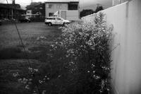 華やかじゃないけど白い花が綺麗だ。20200628 - Yoshi-A の写真の楽しみ