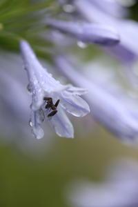 雨上がり - ecocoro日和