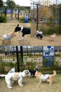 ドッグラン色々① - C-style*シニア犬お散歩ブログ