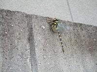昆虫 - 季節の写真