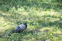 鳩の昼寝 - わんまいる*さんぽみち