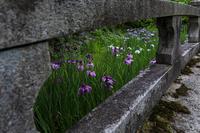 初夏の神光院 - 花景色-K.W.C. PhotoBlog