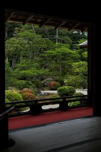 曼殊院のサツキ - 花景色-K.W.C. PhotoBlog