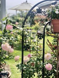 ちょっと一休み♫今の我が家のバラの2番花♡ - 薪割りマコのバラの庭