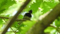 八ヶ岳南麓 - 山と鳥を愛するアナパパ