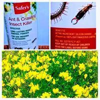 こんな素晴らしい商品が!虫対策は安全な天然物質で!アリやゴキブリ等に効く(ペットのノミにも使用可能)。スモークソーセージ。訪問ミニラビ。 - カナダの国アリス ☆Canadian Life生活楽しみ方☆