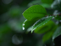 今日も雨降り - 節操のない写真館