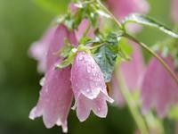 雨上がりの庭 - ムンモ(おばあちゃん)の思い出写真
