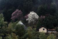 雨中の花たち - katsuのヘタッピ風景