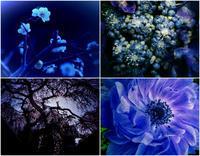 blue blue - IL EST TROP TARD 時は過ぎゆく ... 2