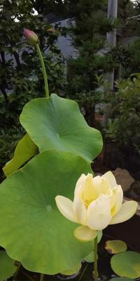 6月30日  「夏越の祓、大祓」の日 - 煎茶道方円流~東京東支部~