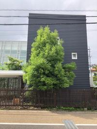 強剪定 - 三楽 3LUCK 造園設計・施工・管理 樹木樹勢診断・治療