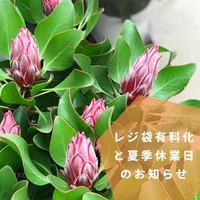 レジ袋有料化と夏季休業のお知らせ - さにべるスタッフblog     -Sunny Day's Garden-