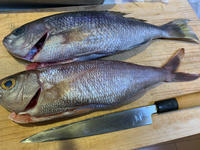 関東の魚盛り合わせにしてみた❣️ - 漁師です・・・