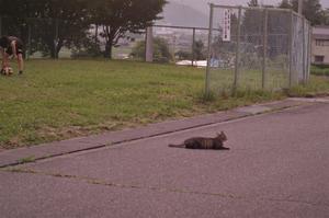 6月29日 お向かいの猫ちゃん -