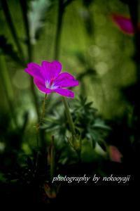 花 - の~んびりと・・・