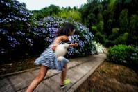 ★紫陽花の森を駈ける - 一写入魂