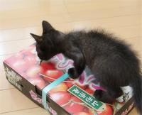 子猫と赤い宝石 - ちいさなチカラ