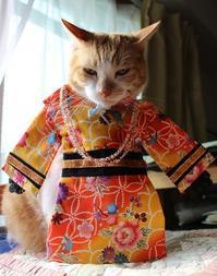 織姫様のはずが - ぎんネコ☆はうす