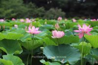 花の色 - Kokoronohane's Blog
