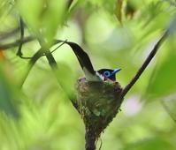 孵化寸前、、残念、 - ぶらり探鳥