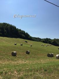 リーベス収穫とひまわり畑 - ボローニャとシチリアのあいだで2