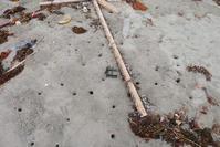 スナガニの住宅事情 - Beachcomber's Logbook