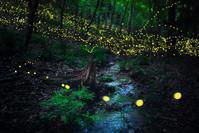 雨跡の森で - Qualia