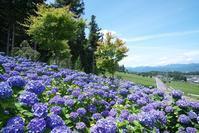 霞間ヶ渓花畑 - 尾張名所図会を巡る