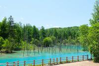 青い池とブルーリバーと~6月の美瑛 - My favorite ~Diary 3~