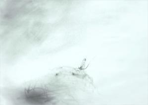 《梅雨の晴れ間。》 - 『ヤマセミの谿から・・・ある谷の記憶と追想』