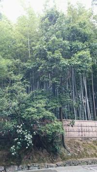 京都大徳寺境内苔生す高桐院へ - 京都ときどき沖縄ところにより気まぐれ