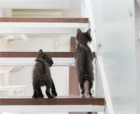子猫と階段 - ちいさなチカラ