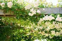 中野市一本木公園(バラ公園) - 野沢温泉とその周辺いろいろ2