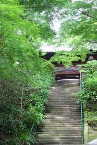 凌霄花 - 木洩れ日 青葉 photo散歩
