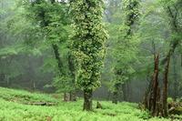 ツルアジサイの咲く森行者還岳 - 峰さんの山あるき