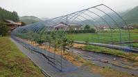 露地植えブルーベリー防鳥網設置 その2 (防鳥網展開) - 初めてのブルーベリー栽培記