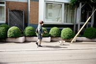 長袖が欲しかった犬の散歩と一転して夏の到来 - 照片画廊