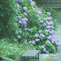 鎌倉散歩 Ⅱ - Rey Photo