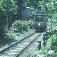 鎌倉散歩 Ⅳ - Rey Photo